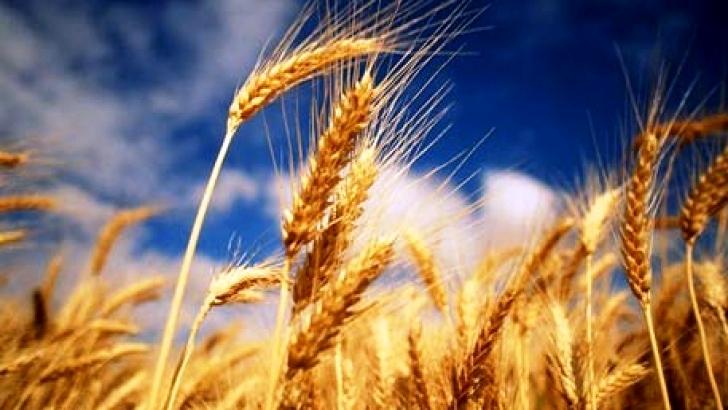 Vand teren agricol perfect pentru a construi o ferma agricola.