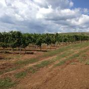 vindem terenuri viticole