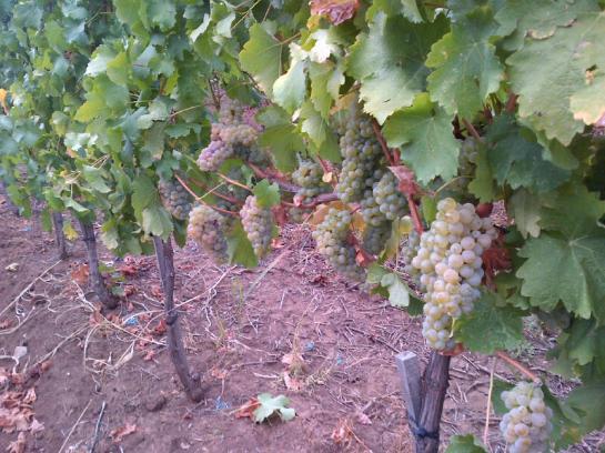 ferma viticola de vanzare