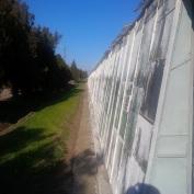 vand ferma legumicola
