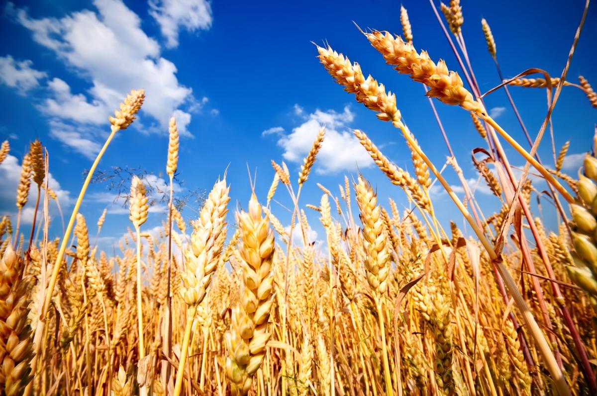 vanzari terenuri agricole