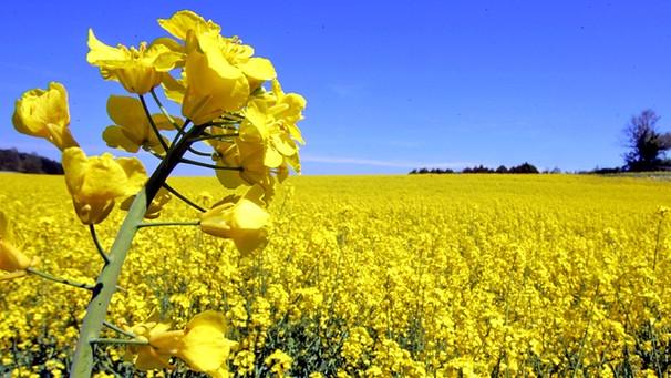 Vand ferma 2400 HA Sud Romania, 1100 hectare in proprietate, 1300 hectare in arenda, baza agricola, utilaje agricole pentru toata gama de lucrari agricole.