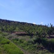 vanzari terenuri viticole,vand teren pomicol,vindem terenuri pomicole,teren pomicol de vanzare,terenuri pomicole pentru vanzare