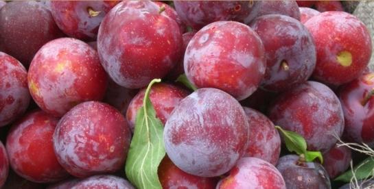 ferme pomicole de vanzare,vindem ferme pomicole,vand ferma pomicola,ferma pomicola de vanzare,