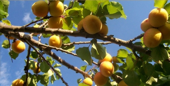 vand ferme pomicole,ferme pomicole de vanzare,vindem ferme pomicole