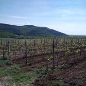 vand ferme viticole,vindem ferme viticole,vand domeniu viticol,domeniu viticol de vanzare,vand combinat vini-viticol
