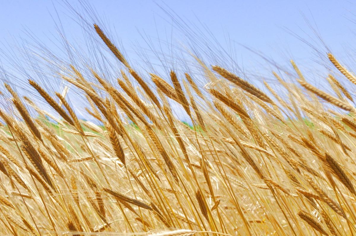 ferme agricole de vanzare