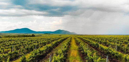 vand domeniu viticol, vinuri ecologice