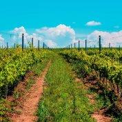 vand ferma viticola ecologica