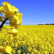vindem terenuri agricole