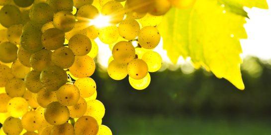 vand ferma viticola